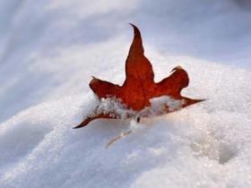 秋的故事:从第一片落叶就开始