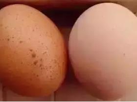 【提醒】危险!这几种鸡蛋千万别吃!